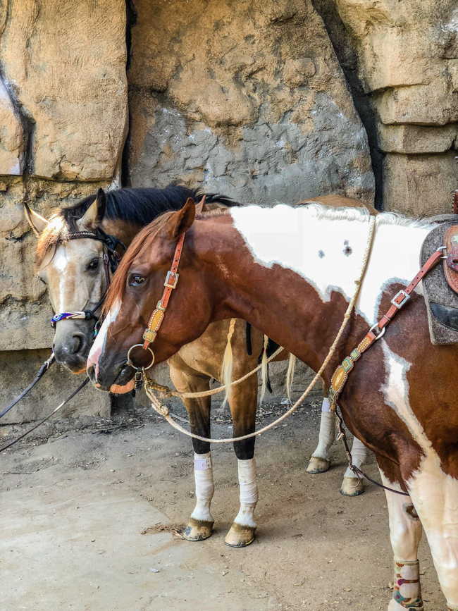 two ponies at the old zoo in Los Angeles