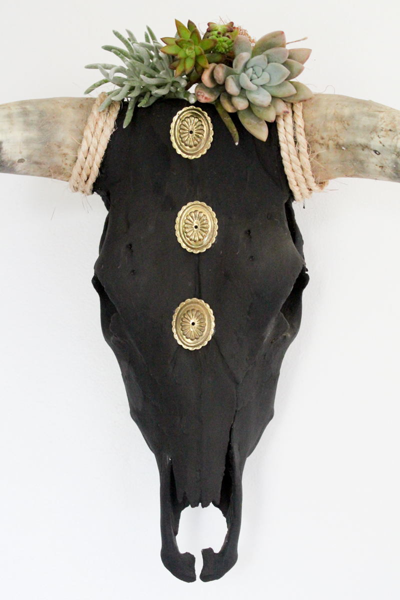 Projet de crâne de boeuf succulent bricolage