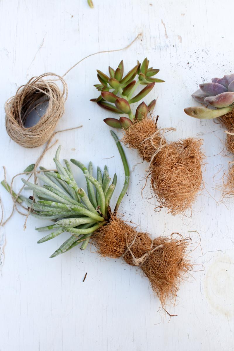 Plantes succulentes d'emballage