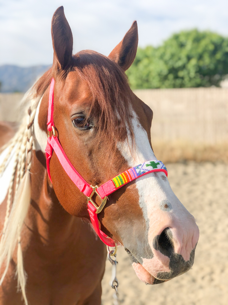 Pinte o cavalo em seu novo cabresto