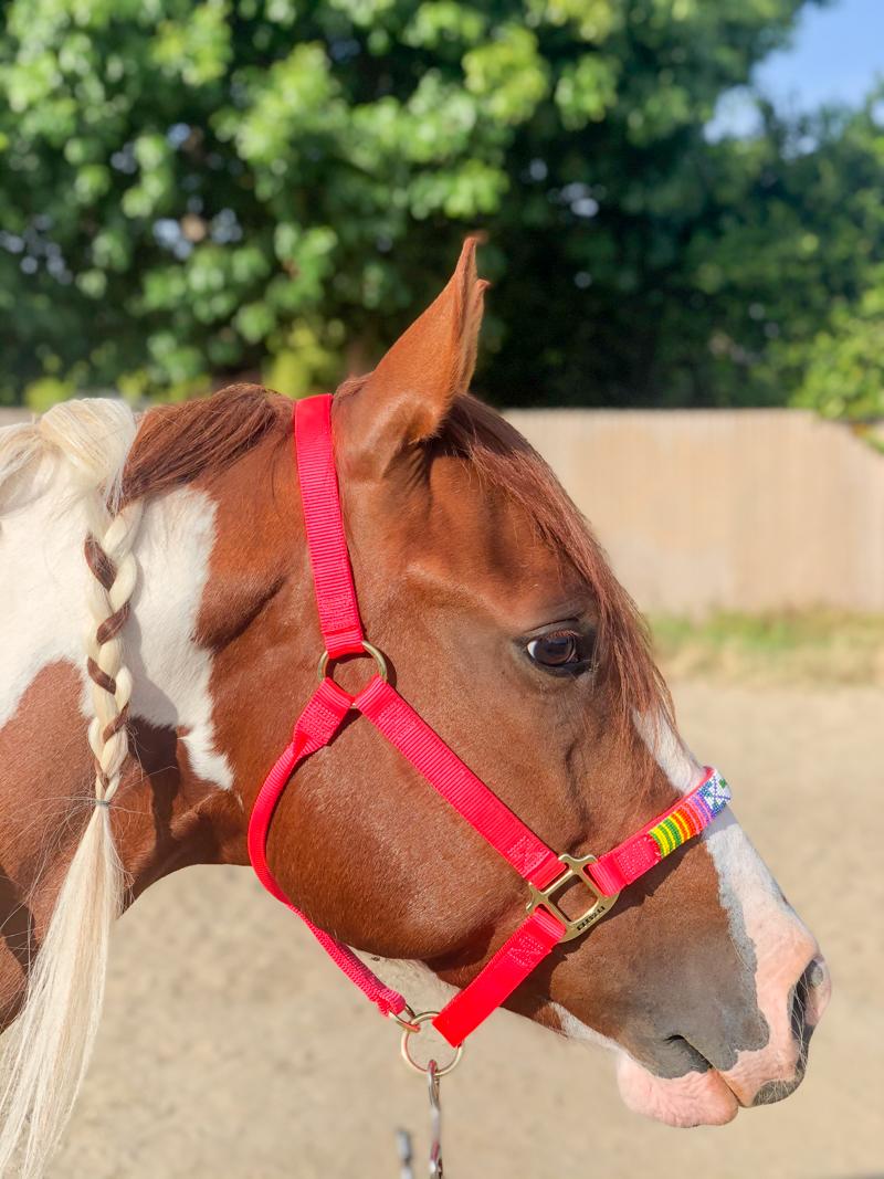 Pinte o cavalo usando um cabresto frisado rosa