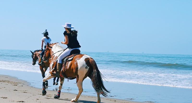 Cavalos a galope na praia