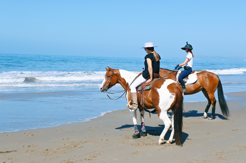 Cavalos verificando o oceano